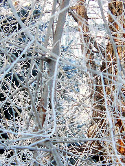 Frozen-branches