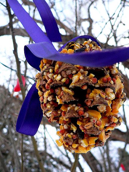 Bird-seed-pinecone