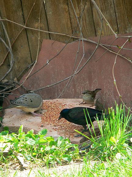 All-birds