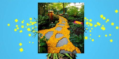 Marigold-walk