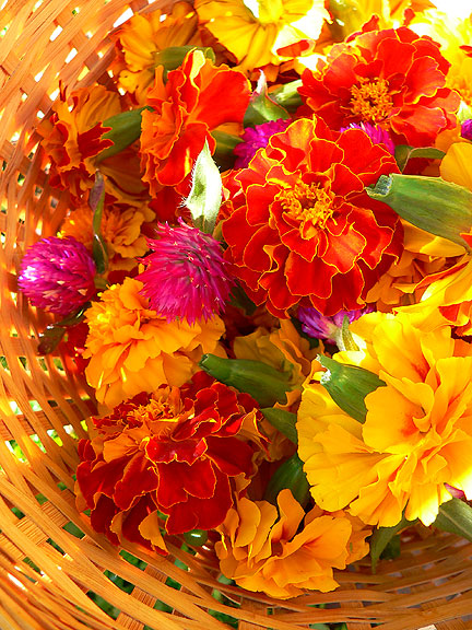 Marigolds-picked