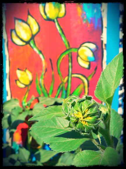 SunflowerBorder
