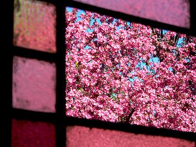 Rose_colored_windows