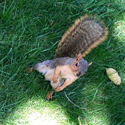 Squirrelie