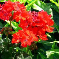 Blogball_red_flower