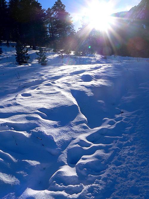 Blue_snow