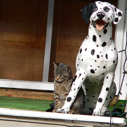 Cat_and_dog_detail